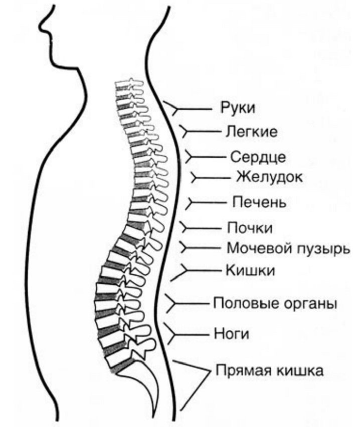 Остеохондроз позвоночника, лечение и признаки