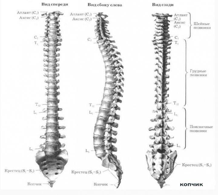 Остеохондроз позвоночника, лечение и признаки схема