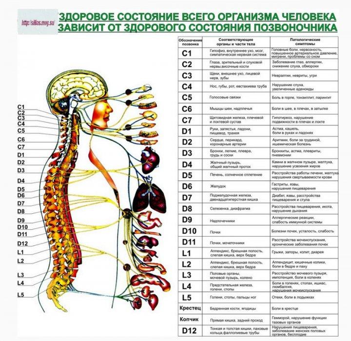 Защемление нерва в позвоночнике таблица