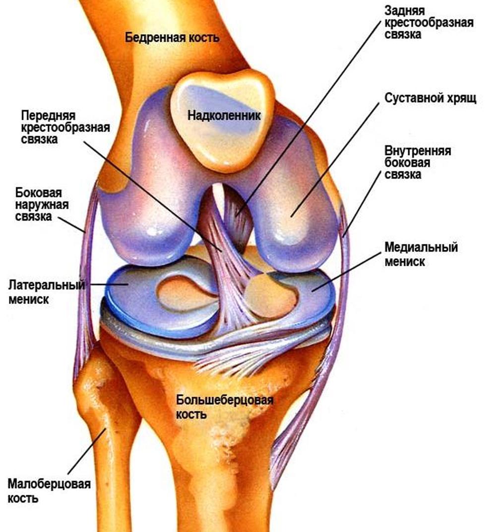 Развитие мышц окружающих коленный сустав строение